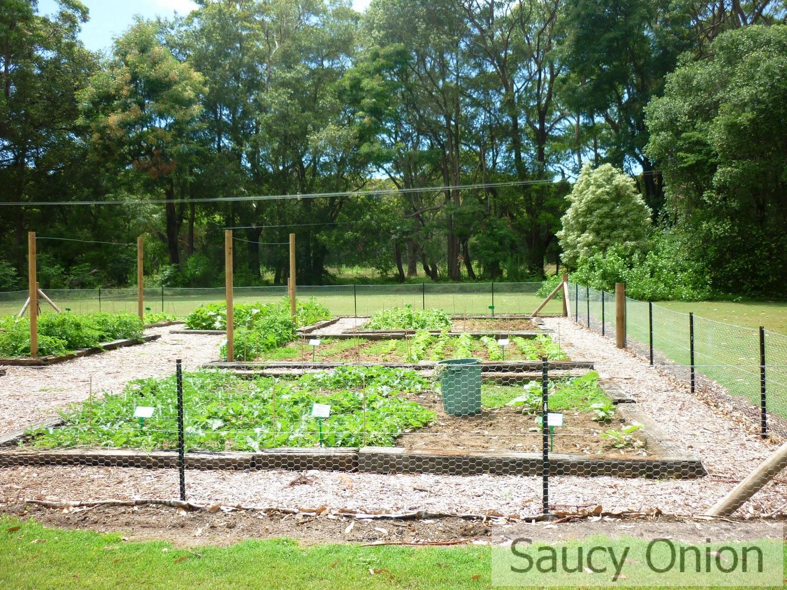 Kitchen Garden Hens Stefano Manfredis Kitchen Garden At Bells Killcare Saucy Onion