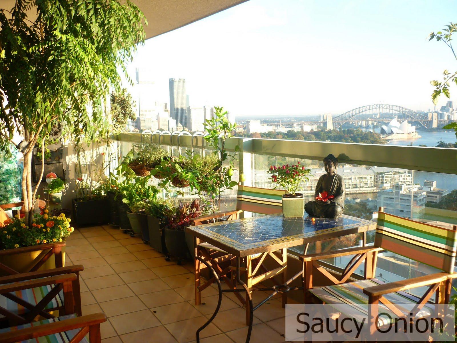 edible balcony u2013 awash with morning sun saucy onion